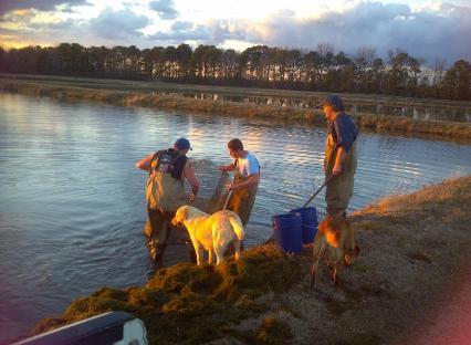 Live Fish for Pond Stocking in NC, SC, and VA, - Carolina